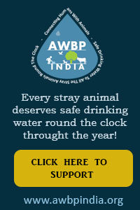 donate to animals water bowl project india
